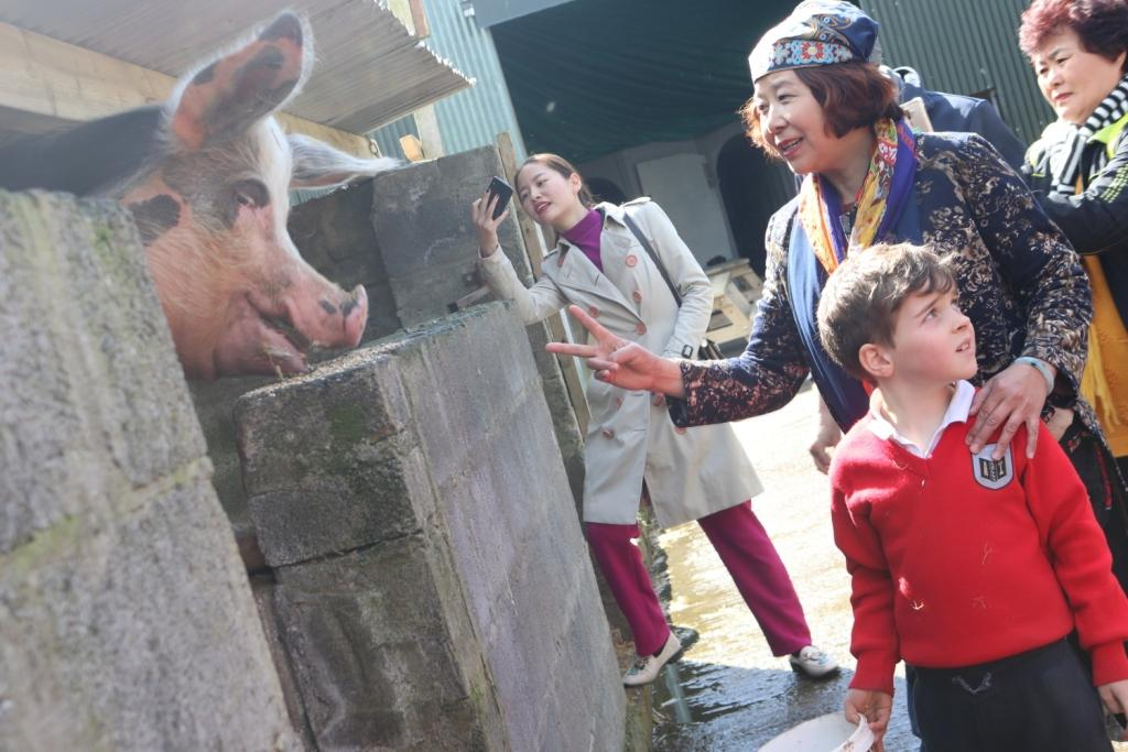 Chinese Visitors meet the animals at Causey Farm in Ireland